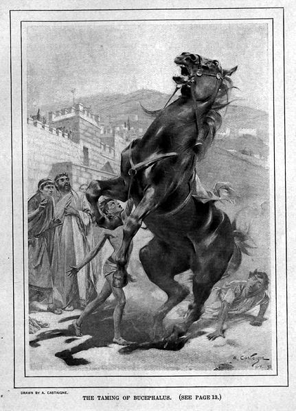 The Taming of Bucephalus
